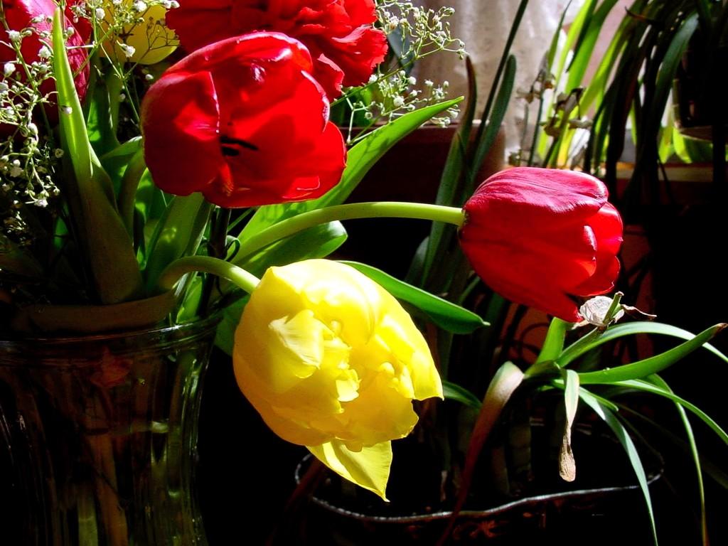 покажите картинки цветов разных цветов характеристики Лада Приора